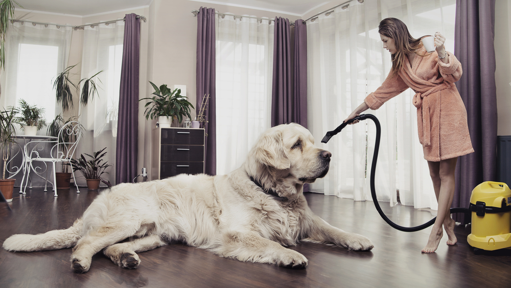 best pet hair vacuum reviews