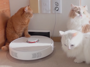 cats with robot vacuum for picking up fur litter