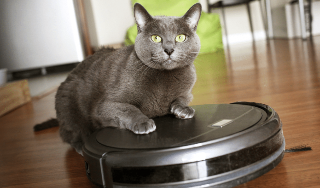 good vacuum for cat litter